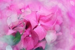 flower-583093_640