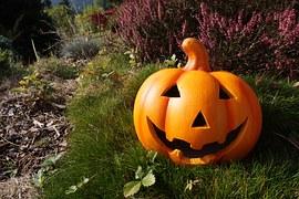 pumpkin-980587__180 (1)