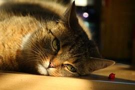 cat-1012498__180