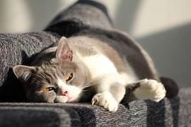 cat-916043__180
