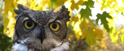 owl-985612__180